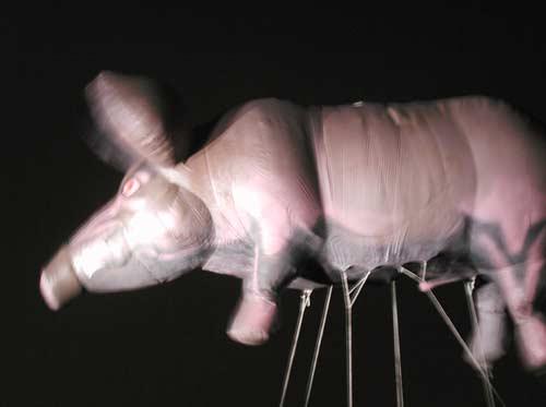 Pink Floyd's pig